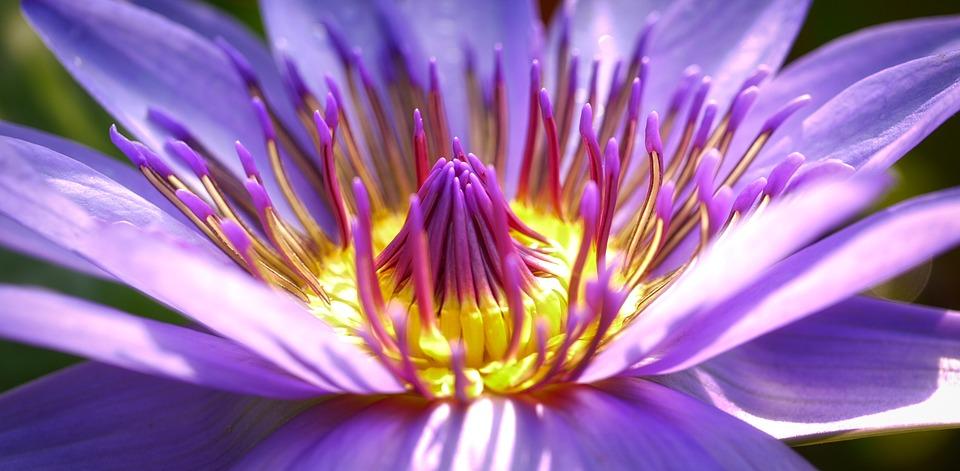 flower-2919284_960_720